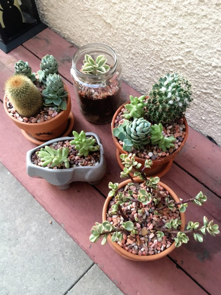 Other succulents